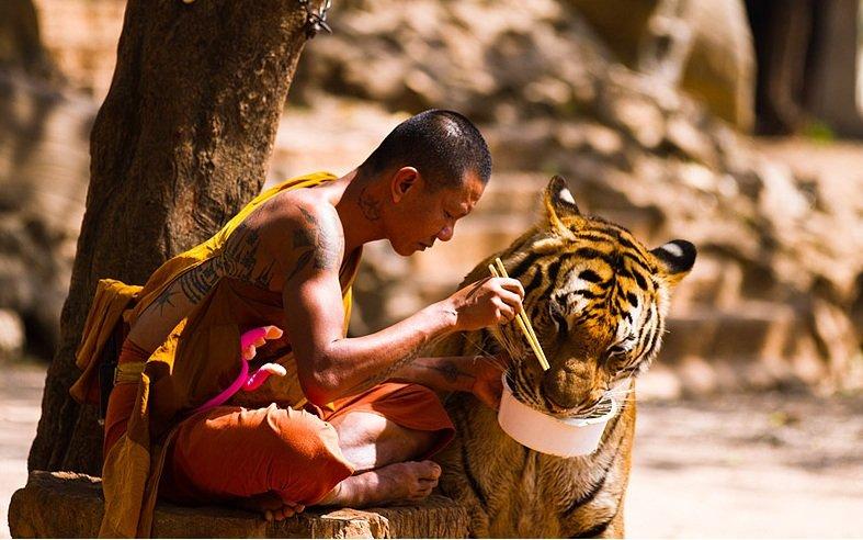 buddist_tigr